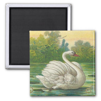 Swan Square Magnet
