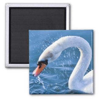 Swan - Magnet