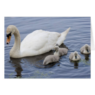 Swan Mother and Cygnets Card