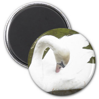 Swan of the Lake 6 Cm Round Magnet