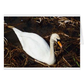 Swan on  Lake Card