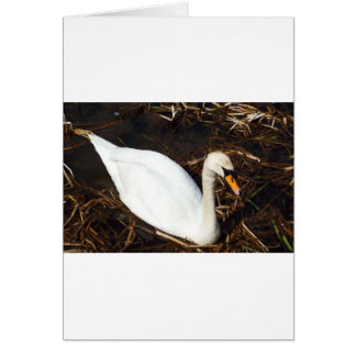 Swan on  Lake Card