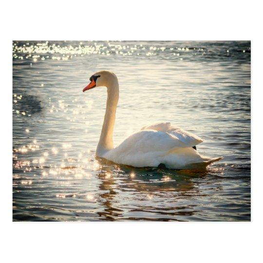 Swan postcard