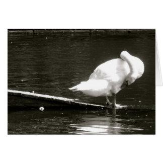 Swan Preening Note Card By Brad Hines