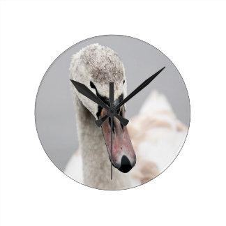 Swan Proud To Be A Swan Pride Water Bird Nature.jp Round Clock