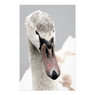 Swan Proud To Be A Swan Pride Water Bird Nature.jp Stationery