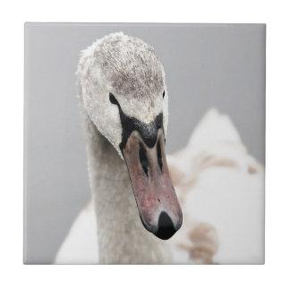 Swan Proud To Be A Swan Pride Water Bird Nature.jp Tile