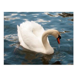 Swan Song Postcard