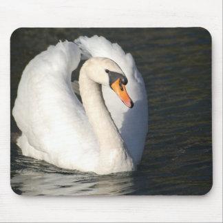 Swan Swan mute swan Mouse Pad