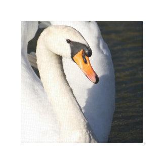 Swan Swan - photo Jean Louis Glineur Canvas Print