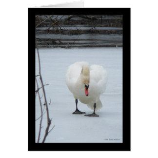 Swan Territory Greeting Card