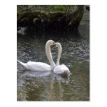 Swan Wedding Love Peace Hope Water Lake Park