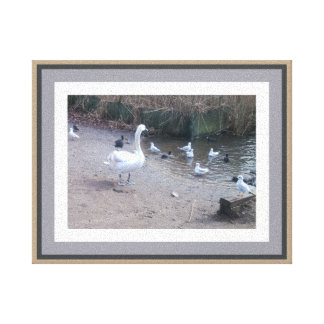 Swan with cheeky gulls and more respectful coots canvas print