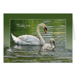 Swan with cygnet in water for thank you card