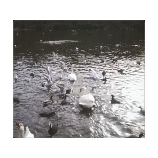 Swans 2 with laughing swan corner canvas print