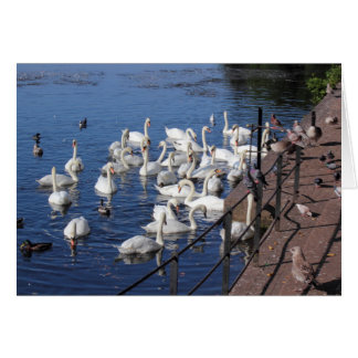 Swans and Other Birds at Roath Park Lake Cardiff Greeting Card