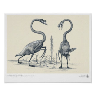 Swans as Imagined by Future Palaeontologists Poster