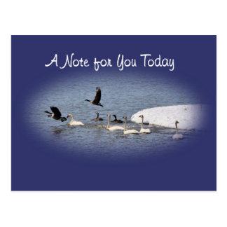 Swans & Geese Postcard-oval- customize Postcard