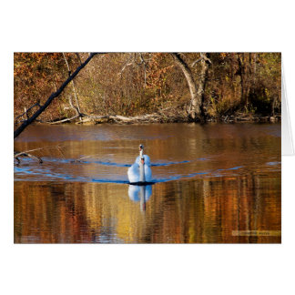 Swans in Autumn Greeting Card