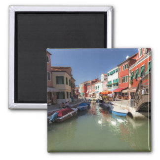 Swans in canal, Burano Island, Venice, Italy 2 Square Magnet