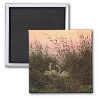 Swans in the Reeds, c.1820 Square Magnet