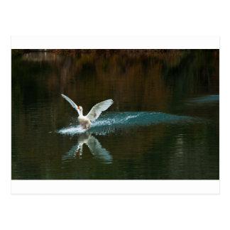 swan's lake postcard