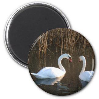 swans refrigerator magnets