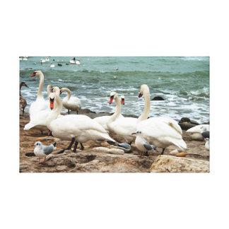 Swans on the beach. canvas print