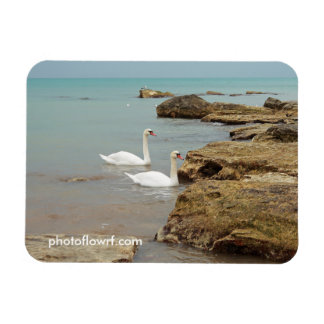 Swans on the sea shore. rectangular photo magnet