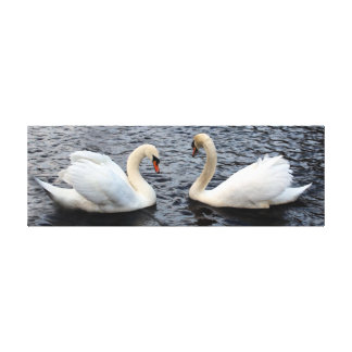 Swans on water canvas print