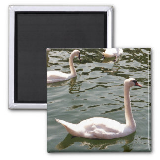 Swans on Water Square Magnet
