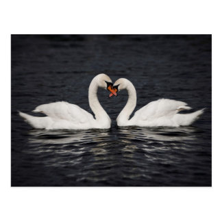 Swans - Partners For Life Postcard
