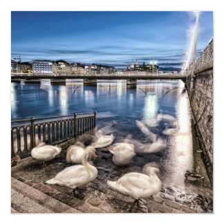 Swans shadows at Geneva lake, Switzerland Card