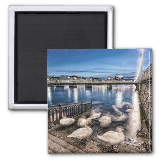 Swans shadows at Geneva lake, Switzerland Square Magnet