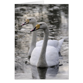 Swans Together Card