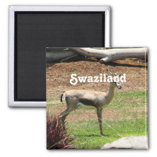 Swaziland Gazelle Magnet