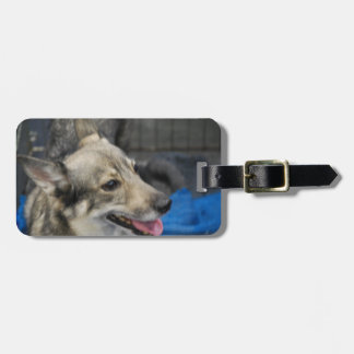 swedish-vallhund-2.jpg luggage tag