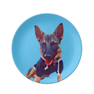 Swedish Vallhund Plate