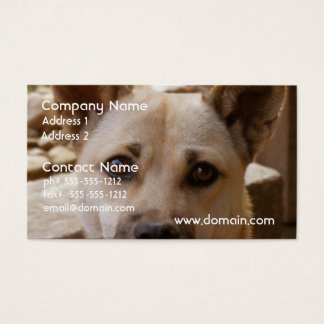 Sweet Akita Business Card