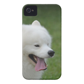 Sweet American Eskimo Dog iPhone 4 Cover
