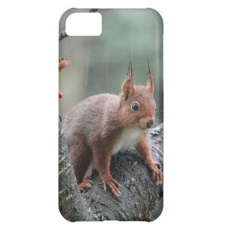 Sweet Animal iPhone 5C Covers