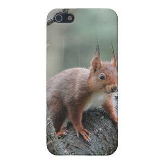 Sweet Animal iPhone 5/5S Case