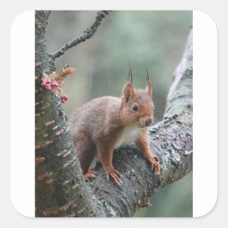 Sweet Animal Square Sticker