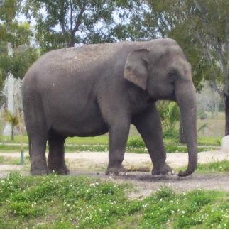 Sweet Asian Elephant Standing Photo Sculpture