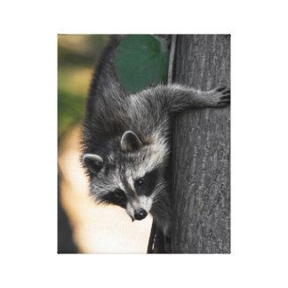 Sweet Baby Raccoon Canvas Print