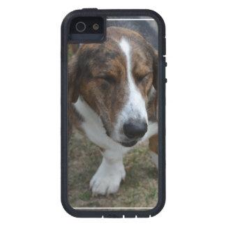 Sweet Basset Hound iPhone 5 Case