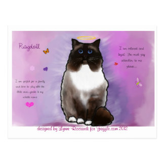 Sweet Beautiful Ragdoll Postcard