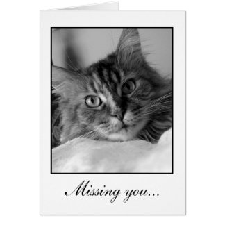 Sweet black and white photo of tabby cat card