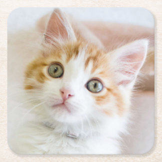 Sweet Blue Eyed Kitty Square Paper Coaster