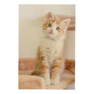 Sweet Blue Eyed Kitty Wood Canvas